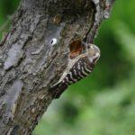 自然観察での カメラ・スケッチのススメ