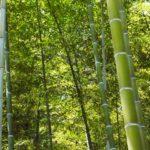バーベキューにプラスアルファで青竹の香りを満喫しよう!